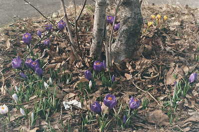 Springy Day 03-18-11
