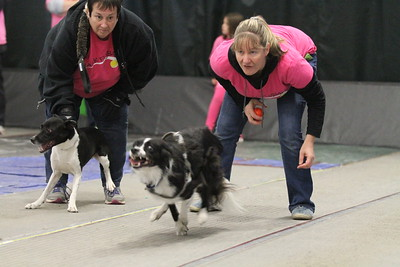 Flyball MAINEia 2016