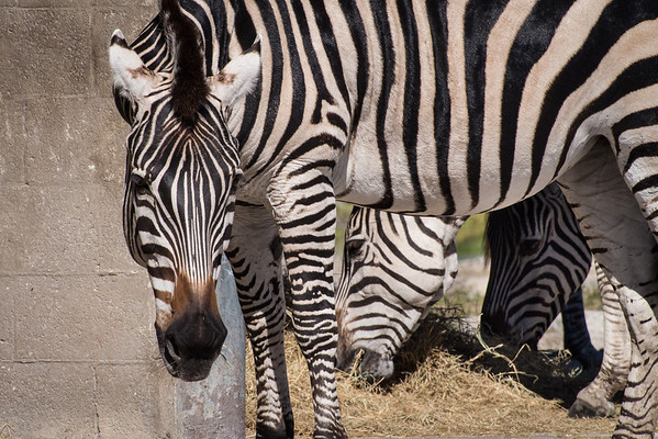 Parcs - Festivals - Zoo  - Foires