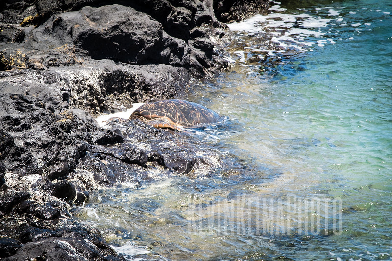 Maui2016-133.jpg