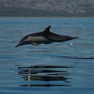 2005 - Mexico - Baja 1 of 3
