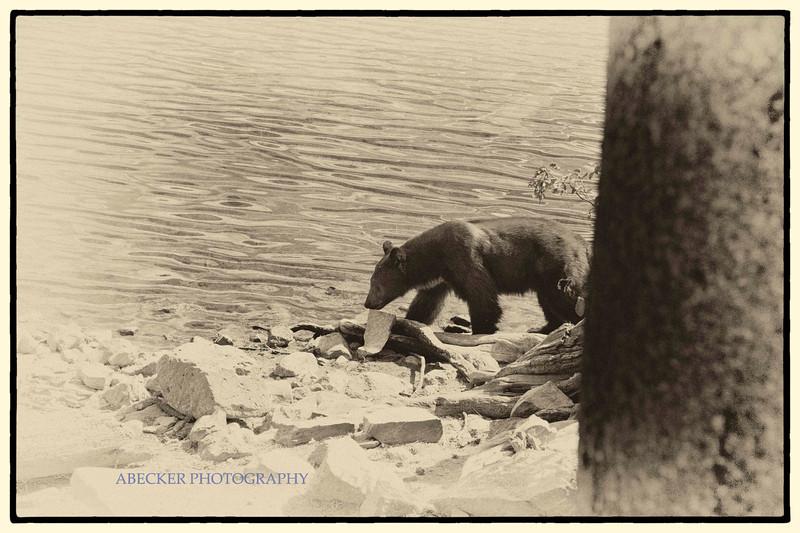 AA Bear.jpg