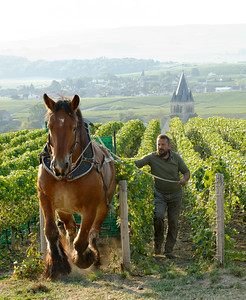 France: Champagne - a feast for all senses