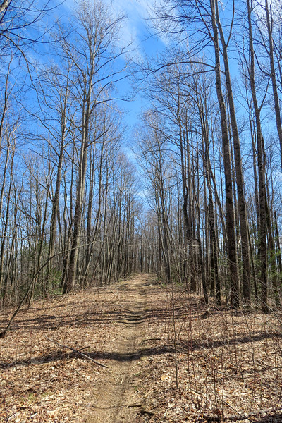 Bennett Gap Trail -- 3,560'
