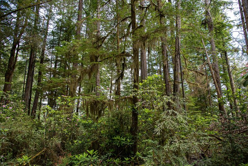 redwoodsFin-0964.jpg