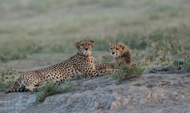 Tanzania_Feb_2018-95.jpg