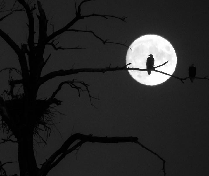 08-31-2020-eagle-moon-6.jpg