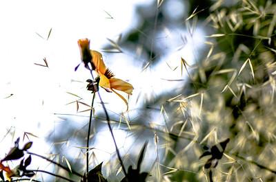 Daydream in a garden