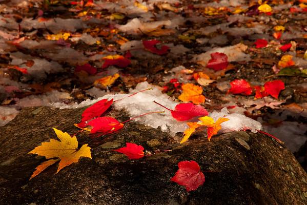 Foliage 30-Oct