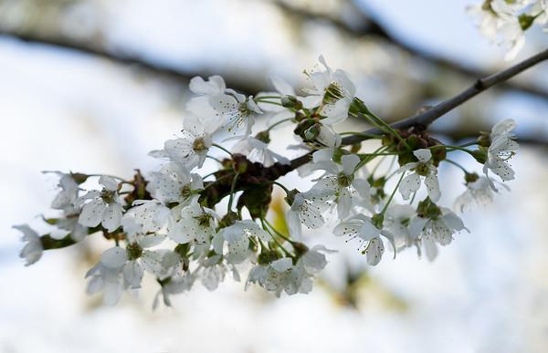 Spring in Spaldwick and Coronavirus (2020)