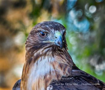 Hawks & Raptors