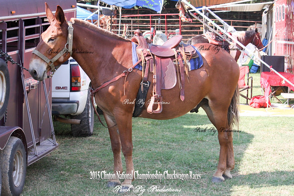 Wednesday Trail Clinic, Auction, Roping, Snapshots
