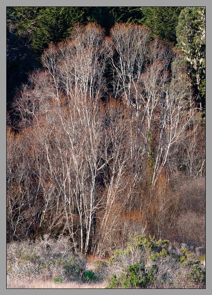 Alders in Fall.jpg