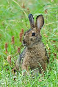 Rabbits-Hares