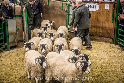 Kirkby Stephen Swale Ewes 2018