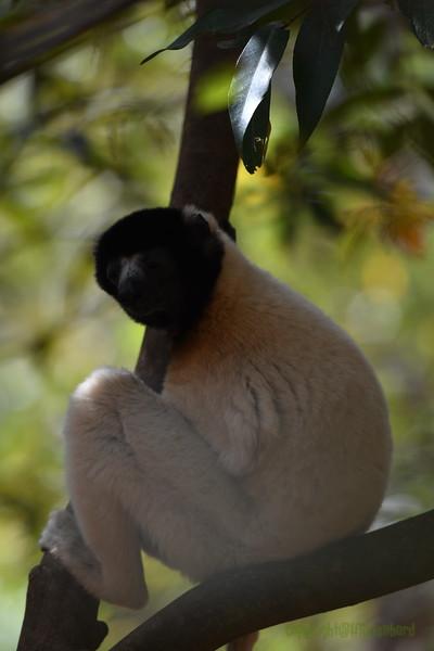 Madagascar 2017 (13)