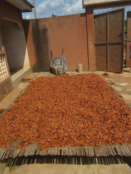 039_Aniassué. Cacao. 4 de 4. On laisse sécher au soleil pour 7 jours.JPG