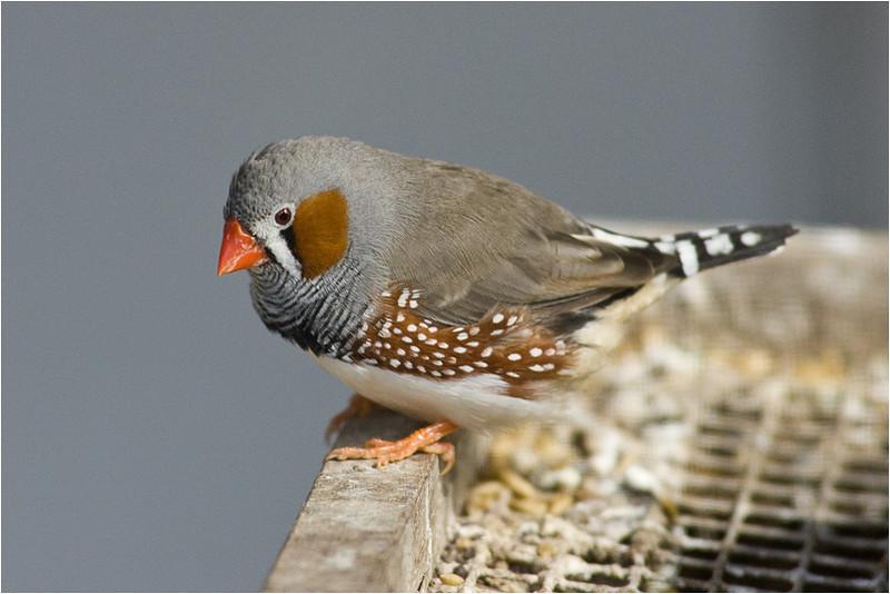 Small Birdie