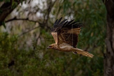 Birds of the Riverlands