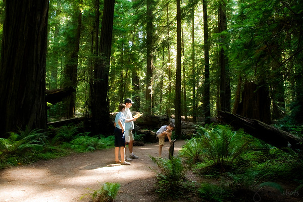 Redwoods and California 2009