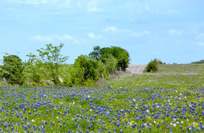 2016_4_9 Texas Wildflower Shoot-8773.jpg