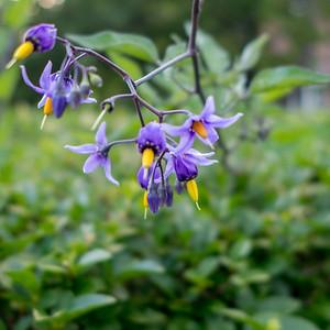 Flowery Woodsy