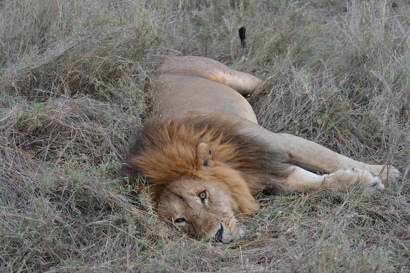 East Africa Safari 274.jpg