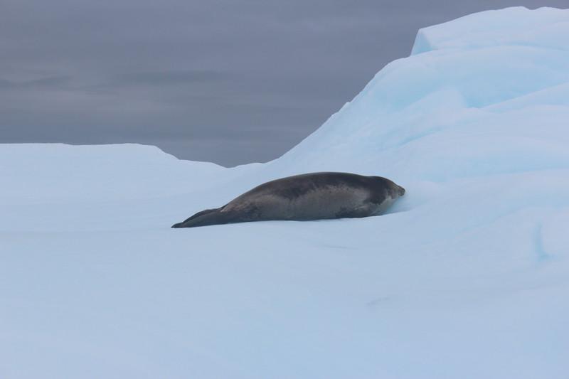Antarctica 267.JPG
