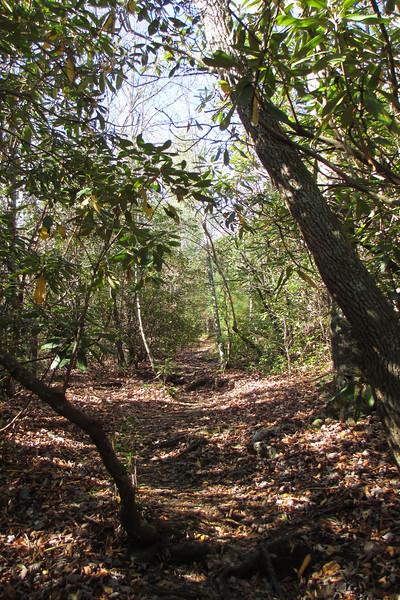 Little Green Trail - 3,950'
