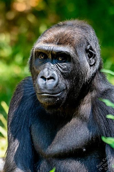 2021-07-09-Woodland-Park-Zoo