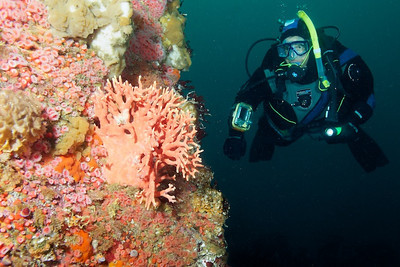 REEF MBNMS Survey 2011