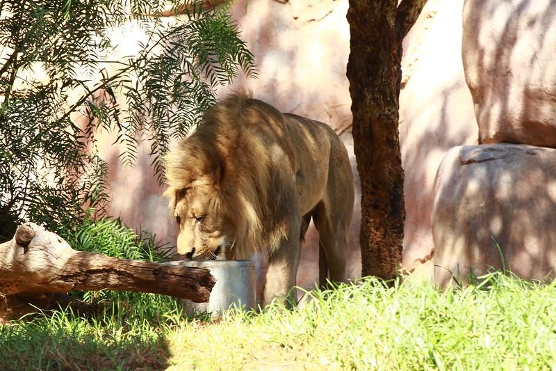 San Diego wild animal pakr 201700077.jpg