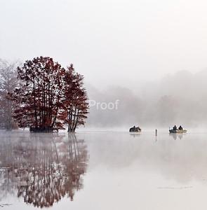 Trees of South Carolina