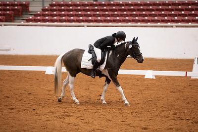 Horse 102