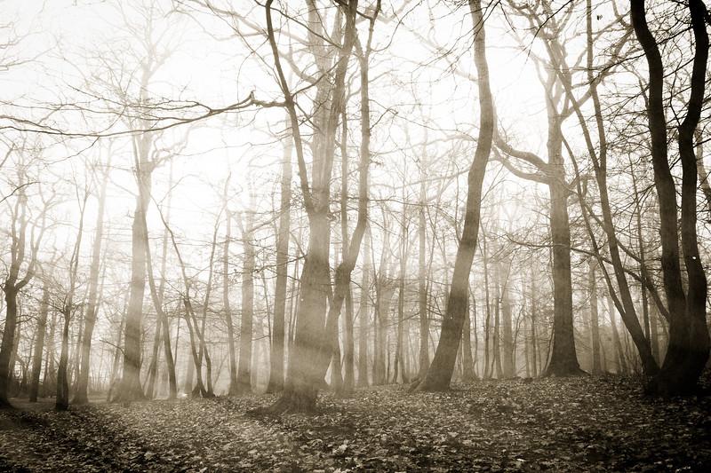 grovelands fog 2015-2258-edit-3.jpg