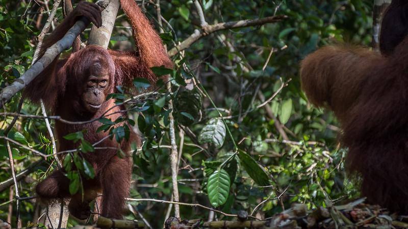 Borneo-2260.jpg