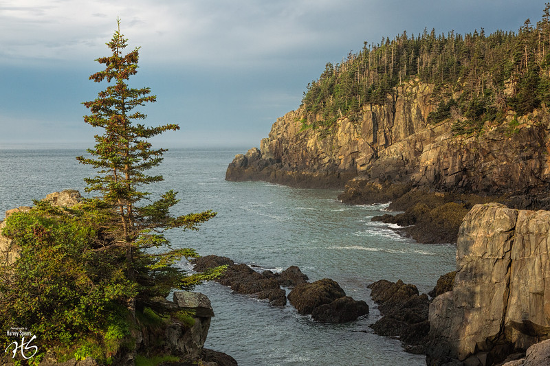 Quoddy Trail at Early Morning