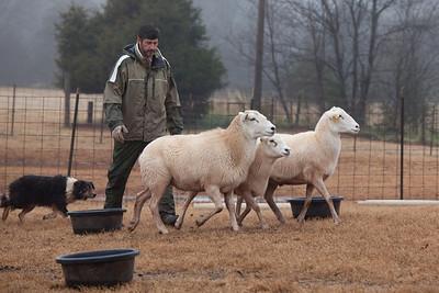 Herding 2010