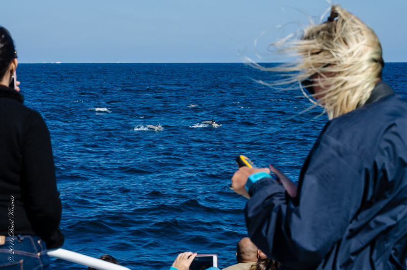 Long Beach Whale Watch