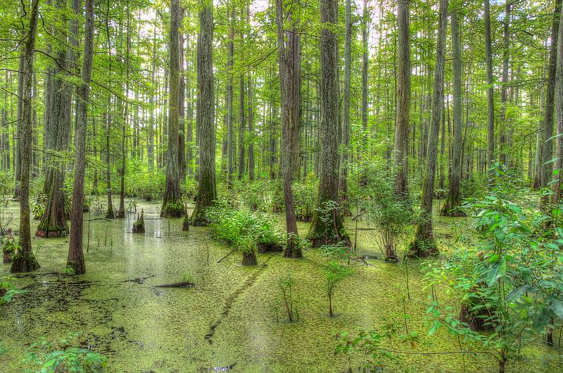 Southern Illinois Cypress SwampDSC_8166_7_8_tonemapped.jpg