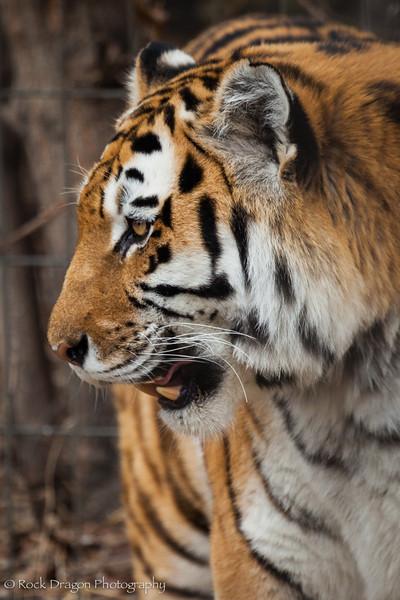 zoo_Apr_2013-19.jpg