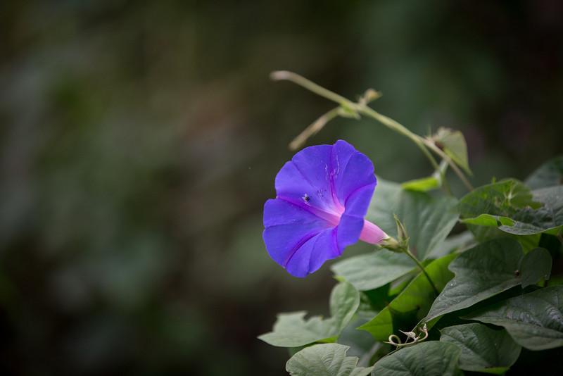 brazilian_flowers-_MG_1467-140307.jpg