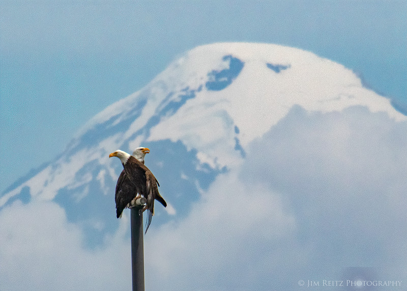 The famous 2-headed eagle of Mount Baker. View from Anacortes, Washington.