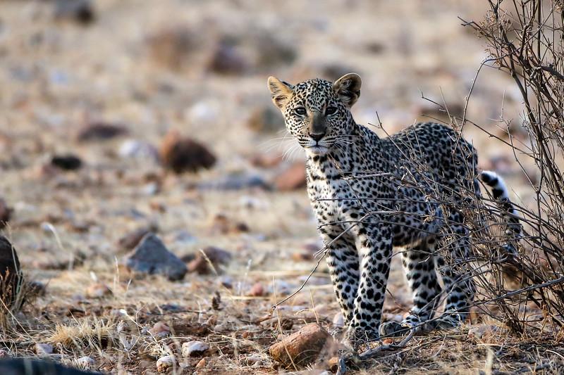 Kenya 2015-00254.jpg