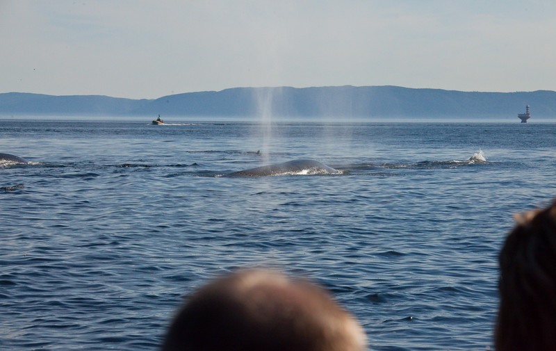 2011 quebec whale watching (34 of 80).jpg