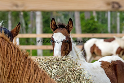 In the corral