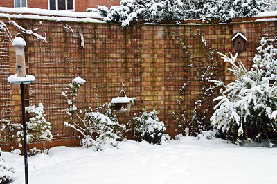 A Snowy Day - Jan 2010