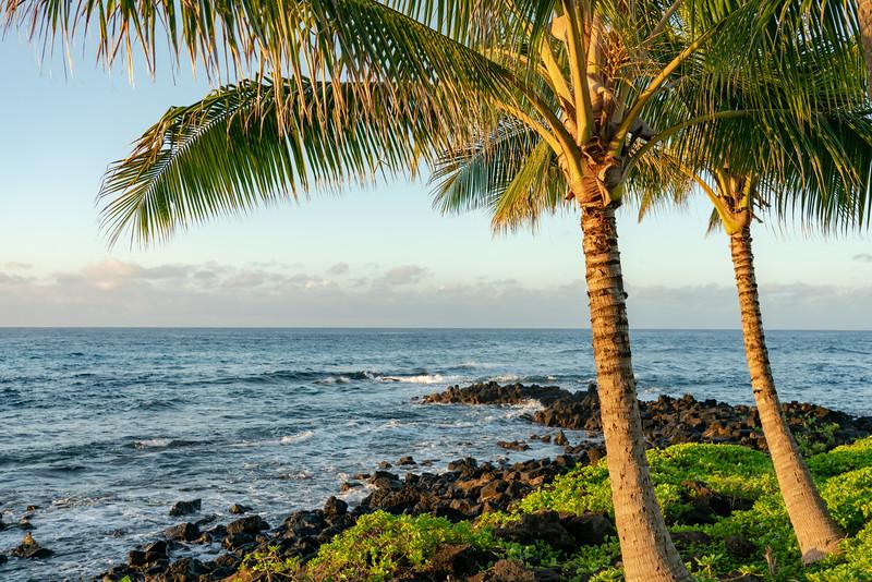 Hawaii 2019-26.jpg