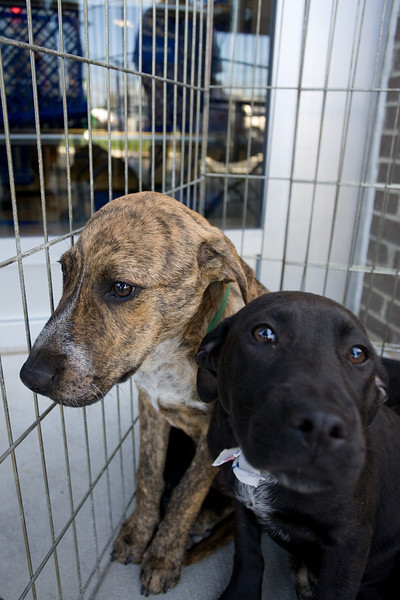 Petsmart_Puppies_RLoken_007_9031.jpg