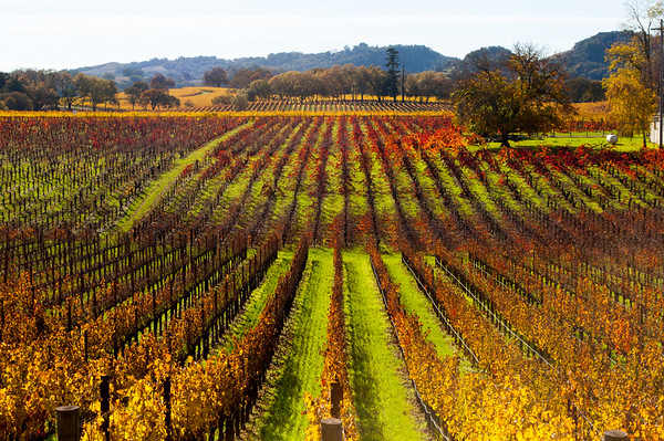 Vineyards, California